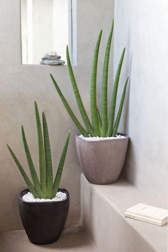 L'aloe Vera pour décorer une salle de douche