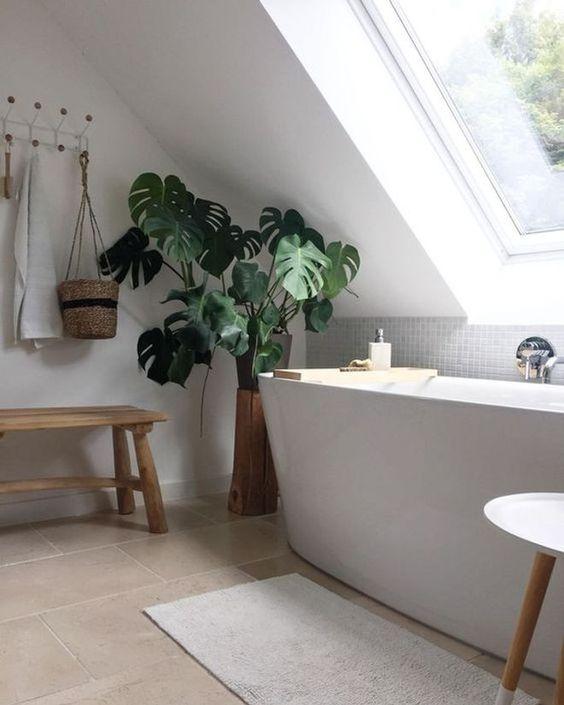 La monstera , une plante pour décorer la salle de bain